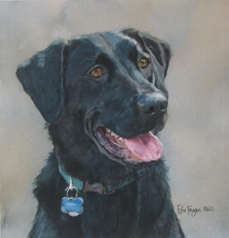 Edie Fagan Adored Dogs watercolor portrait of dog watercolor painting of black Labrador retriever dog