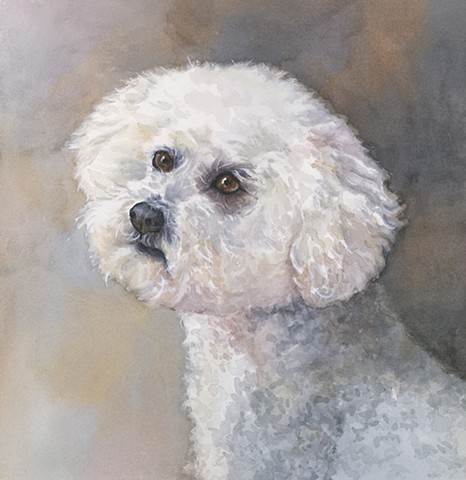 White poodle bichon painting by Edie Fagan Adored Dogs