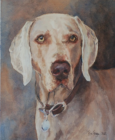 Edie Fagan Adored Dogs watercolor portrait of dog watercolor painting of Weimaraner dog