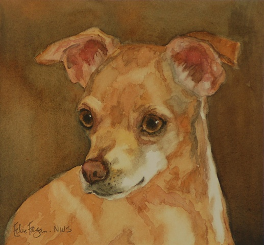 Edie Fagan Adored Dogs watercolor portrait of dog watercolor painting of chihuahua dog