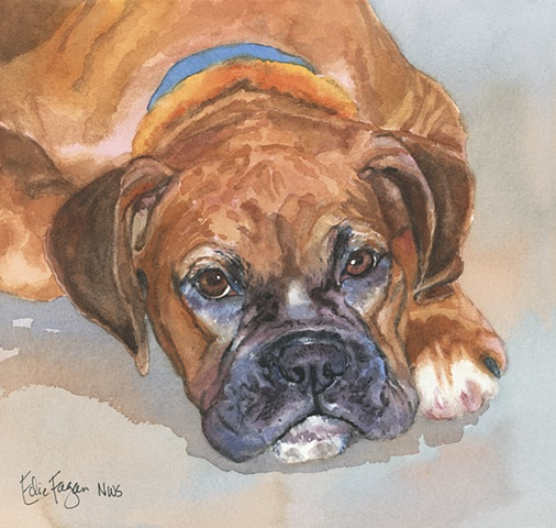 watercolor dog portrait of boxer dog by Edie Fagan Adored Dogs