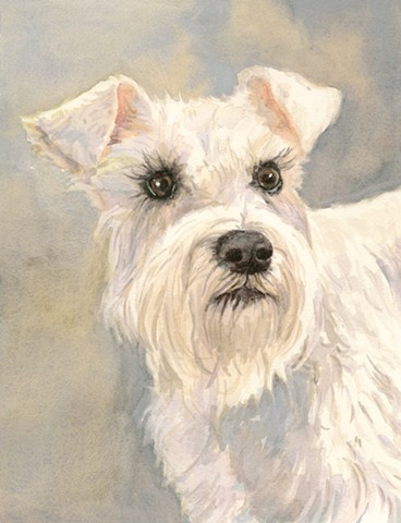 White Schnauzer watercolor painting by Edie Fagan Adored Dogs