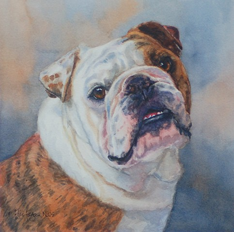 watercolor dog portrait of English Bull Dog by Edie Fagan Adored Dogs