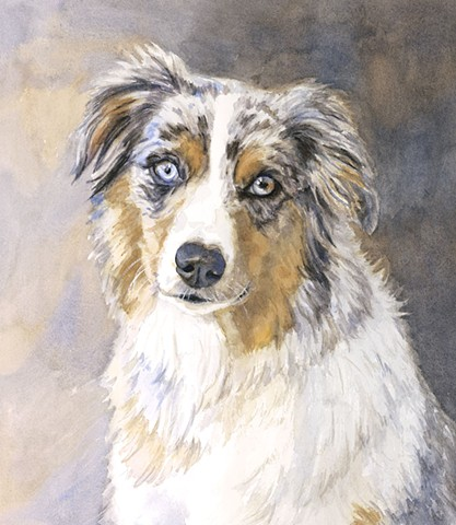 Australian Shepherd Watercolor Painting by Edie Fagan Adored Dogs