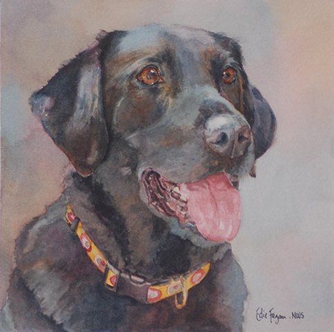 Edie Fagan Adored Dogs watercolor painting of dog watercolor painting of black Labrador Retriever dog
