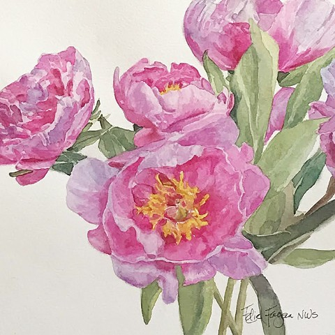Watercolor painting of pink Peonies by Edie Fagan, flowers, floral, botanical, gift, feminine