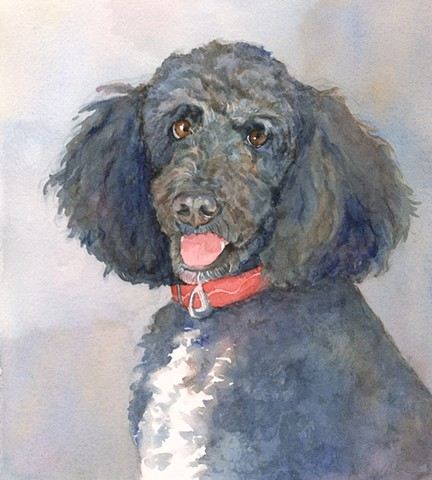 Black Labradoodle watercolor painting by Edie Fagan Adored Dogs