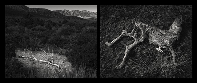 After The Snow Melts, Diptych Spring, Mount Charleston Wilderness Las Vegas Nevada