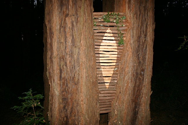 Site specific, eco art, wood carving, redwood trees and branches