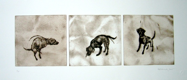 Kitty Blandy Three plate drypoint of a dog