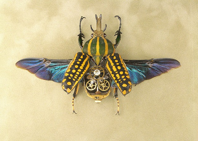 Irridescent wings, Insect, Bug, Green, Yellow, Goliath Beetle, Gears, Steampunk, Steam Punk, Insect, Bug, of Lindsey Bessanson, by Lindsey Bessanson