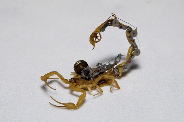 Small Bark Scorpion with Steampunk Gears Mechanical, Insect, Bugs, Gears, Steampunk, Steam Punk by Lindsey Bessanson