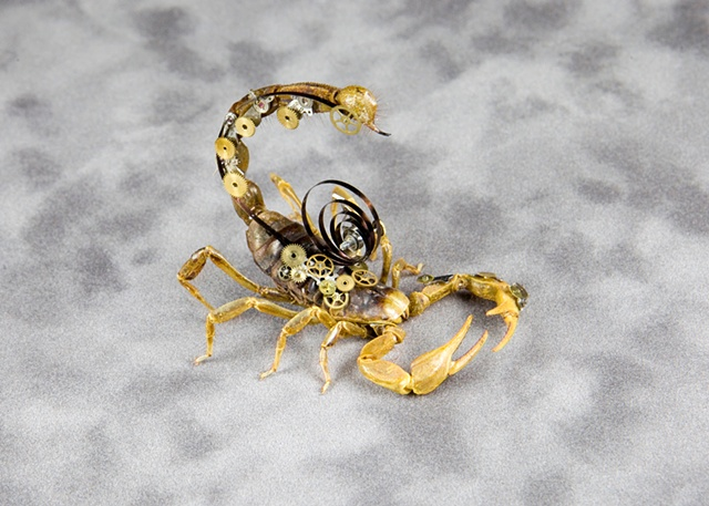 Geared Out Desert Hairy Scorpion! Mechanical, Insect, Bugs, Gears, Steampunk, Steam Punk by Lindsey Bessanson