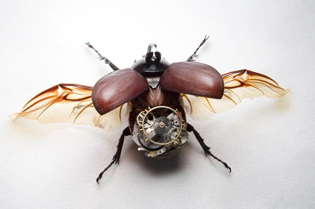 Goliath Beetle with Steampunk Gears Mechanical, Insect, Bugs, Gears, Steampunk, Steam Punk by Lindsey Bessanson