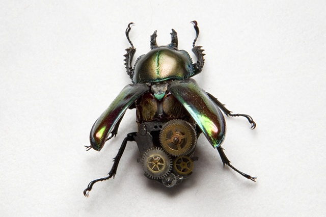 Female Green Metallic Steampunk Stag Beetle