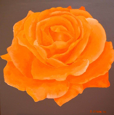 Orange Rose on Taupe