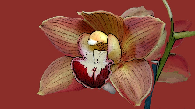 Cymbidium No. 1B