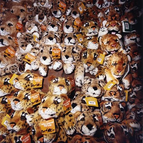 Tigers Tiger Tiger