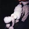 Poodle Balls