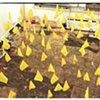 Yellow Flag (series)