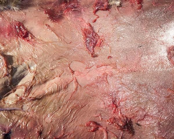 untitled, (skin), 2014 artomatic frederick laura ginn bailey