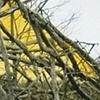 Yellow Shelter