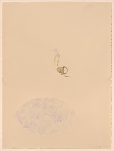 drawing of two objects in the collection of the Mutter Museum, powdered pigment rubbed into the surface of thinned paper carved on the back side