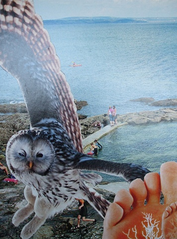 collage, water, owl, painful feet