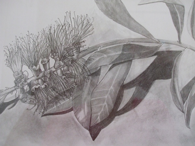 graphite, pencil, botanical, botanical drawing