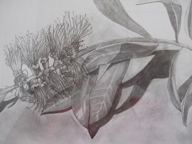 graphite, pencil, botanical, botanical drawing