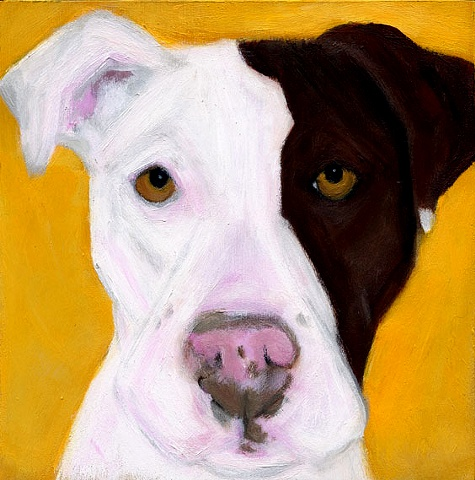 original pit bull dog art portrait painting