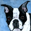 Boston Terrierist Boston Terrier
