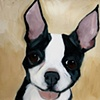 Young Hugo Boston Terrier
