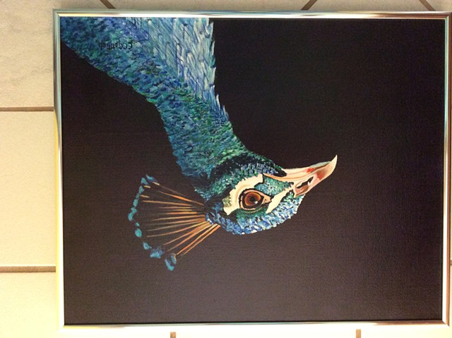 Peacock for Steph