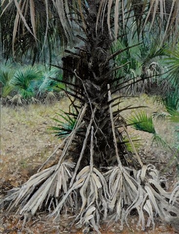 from Ossabaw Island, Georgia. Palm, Landscape