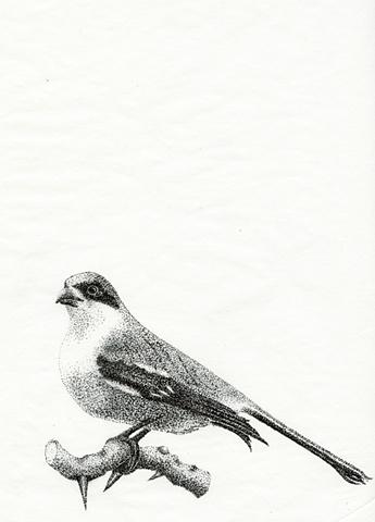 Bird Stippling