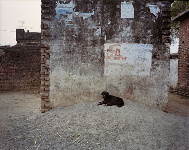 Village dog; Bhojpur, Uttar Pradesh