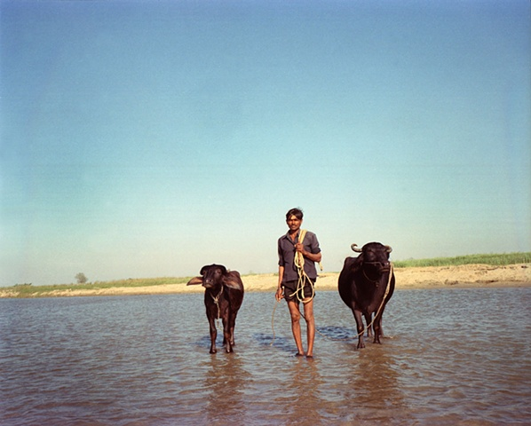 A man and his buffalo; outside Dhampur, Uttar Pradesh