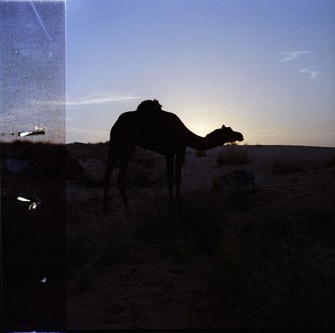 Rani; Thar Desert, Rajasthan
