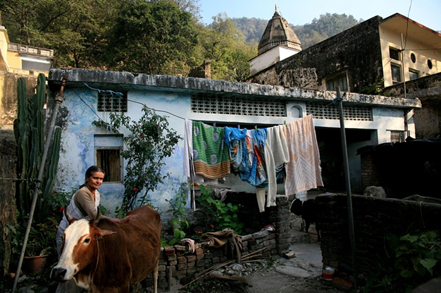 A woman and her cow; Rishikesh, Uttarakhand