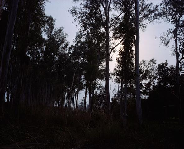 Forest; Dhampur, Uttar Pradesh