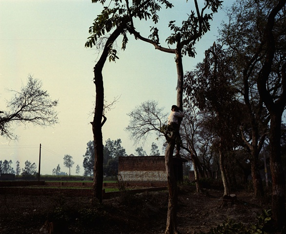 Boy in tree; Dhampur, Uttar Pradesh