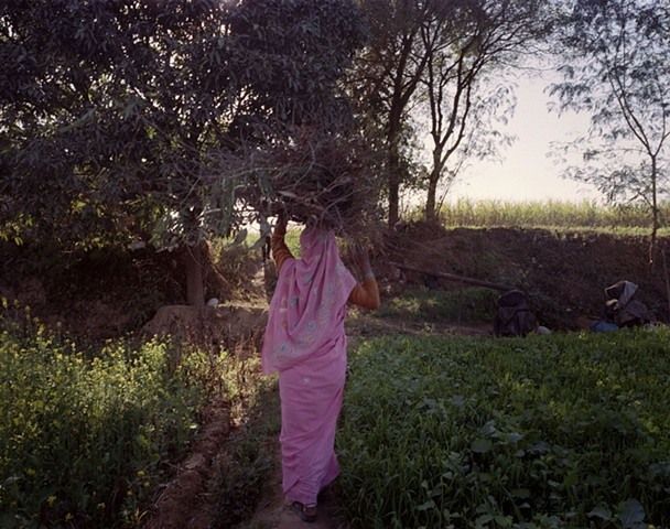 Farmer in pink sari; Dhampur, Uttar Pradesh