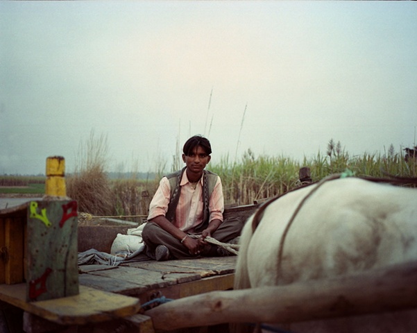 A man on his cart; Dhampur, Uttar Pradesh