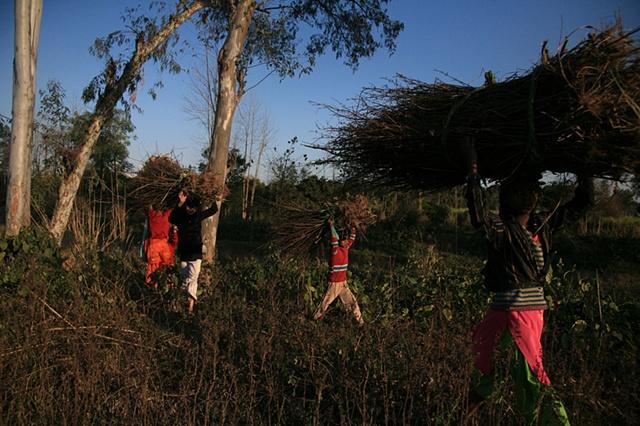 The dance; Dhampur, Uttar Pradesh