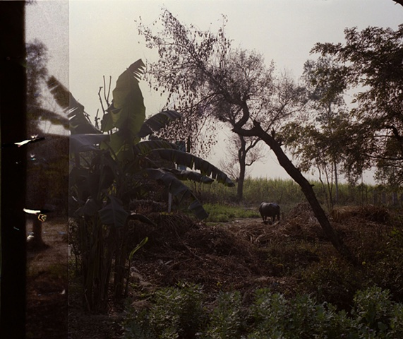 Dhampur backyard; Dhampur, Uttar Pradesh