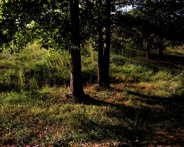 Trees, Palmetto, Georgia; North+South Series, 2008