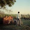 Men and animals; Dhampur, Uttar Pradesh