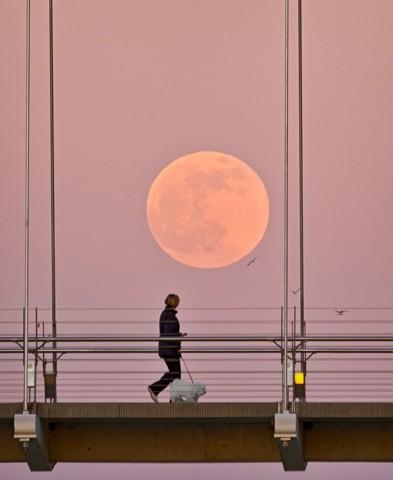 Etobicoke Moonrise  July 2013
