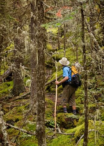 Mossy Trail I